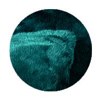 FF29 Lapin Paon